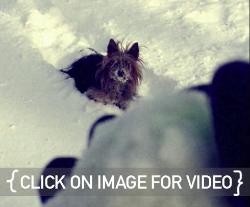 video_link